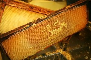 health-benefits-of-raw-honey.jpg