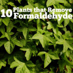 10 Plants that Remove Formaldehyde
