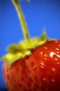 Strawberry Planting Tips & The Best Time To Plant Them