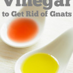How To Use Vinegar To Get Rid Of Gnats
