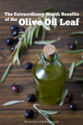 The Extraordinary Health Benefits of the Olive Leaf