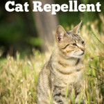 How To Make Your Own Natural Cat Repellent