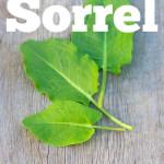 The Health Benefits Of Sorrel