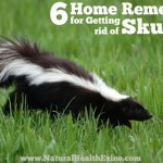 6 Home Remedies For Getting Rid Of Skunks