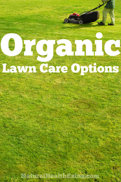 Organic Lawn Care Options