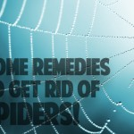 Home Remedies To Get Rid of Spiders