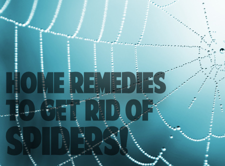 getting rid of spiders