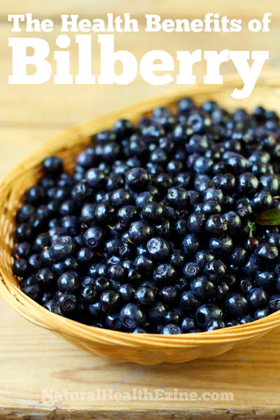 The Health Benefits Of Bilberry