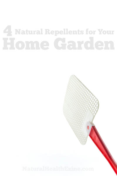 4 Natural Repellents For Your Home Garden