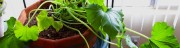 How To Grow A Table Top Indoor Garden