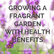 Growing a Fragrant Garden With Health Benefits