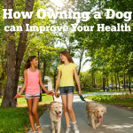 How Owning a Dog Can Improve Your Health