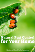 Natural Pest Control For Your Home