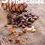 5 More Uses for Pine Cones