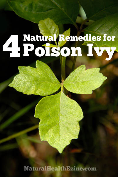 4 Natural Remedies For Poison Ivy