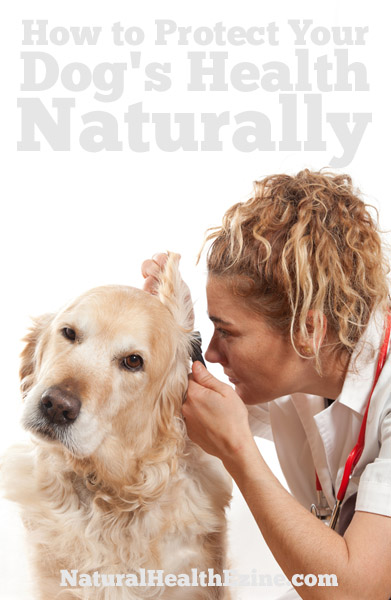 How to Protect Your Dog's Health Naturally