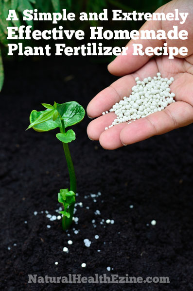 A Simple And Extremely Effective Homemade Plant Fertilizer Recipe