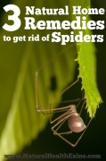 3 Natural Home Remedies To Get Rid of Spiders