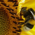 Bee Venom Therapy for skincare and other ailments