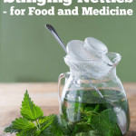 Benefits of Stinging Nettles—For Food and Medicine